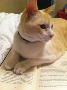 Photo of cat on a book.