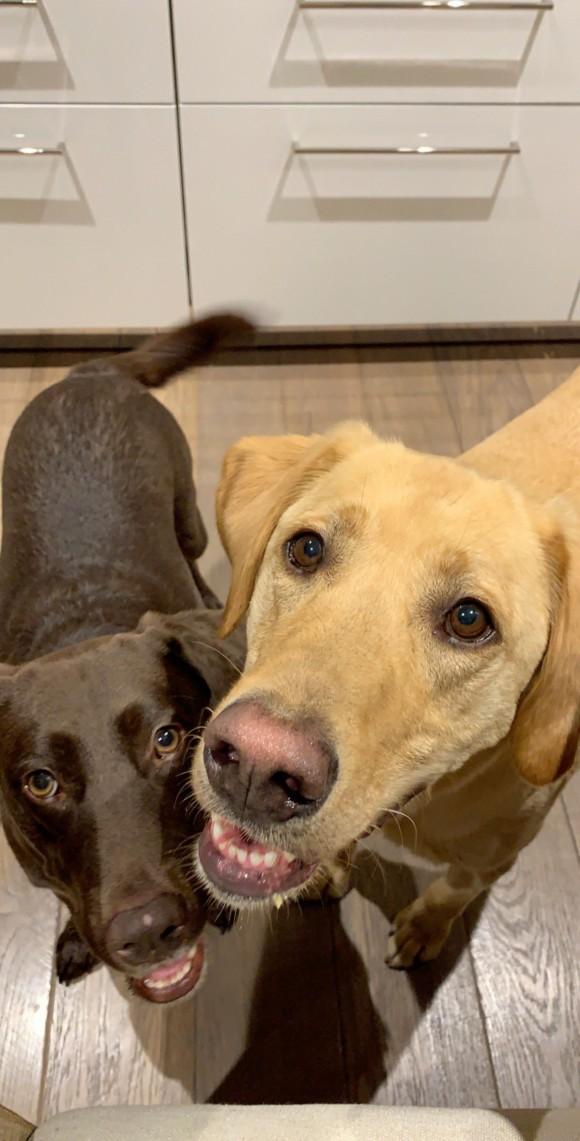 Annalucia dogs