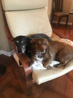 liz dogs