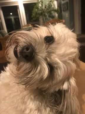 stella dog2